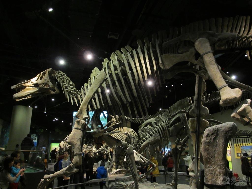 天津自然博物古生物厅展现了中生代爬行动物大发展的热闹非凡的场面