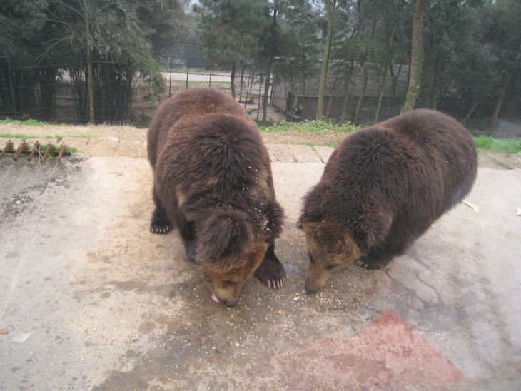 永川野生动物园