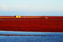 上帝赋予的绚烂色彩:盘锦红海滩国家风景廊道自驾之旅