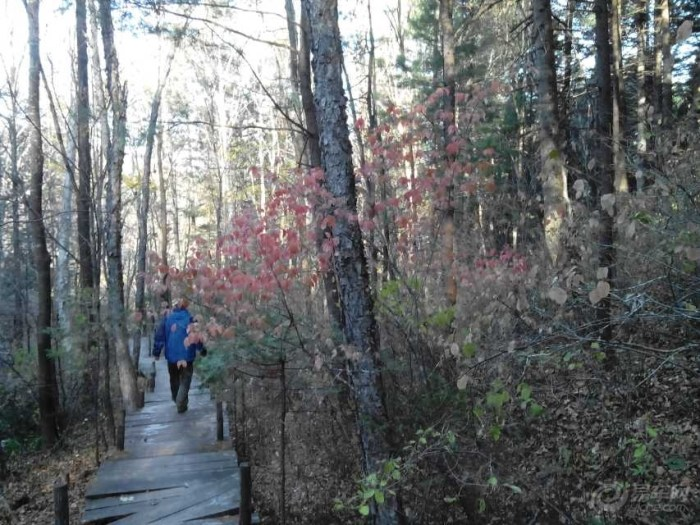 伊春五营森林公园穿越