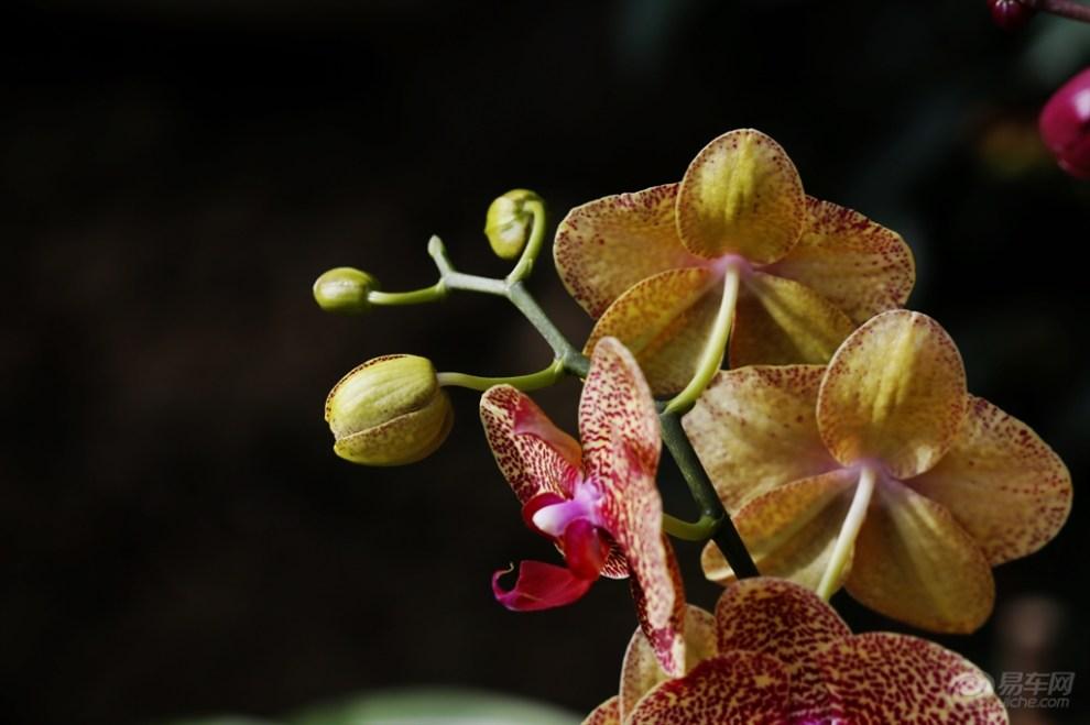 蝴蝶兰种植小知识