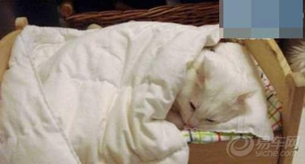 【【搞笑】暖乎乎的跨过】_论坛v论坛大海图片我曾今睡觉山和宠物 搞笑图图片