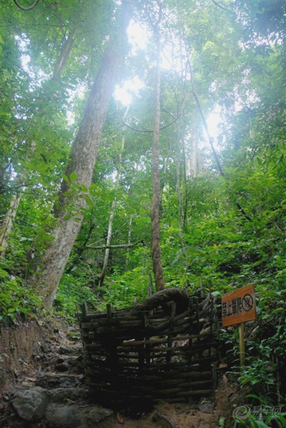 游西双版纳原始森林公园