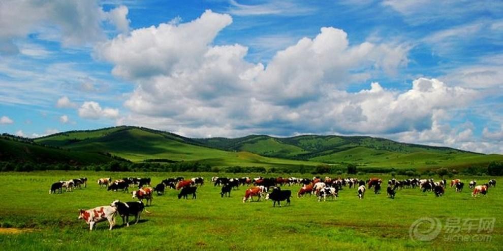 【摄影大赛】呼伦贝尔大草原最美的风景