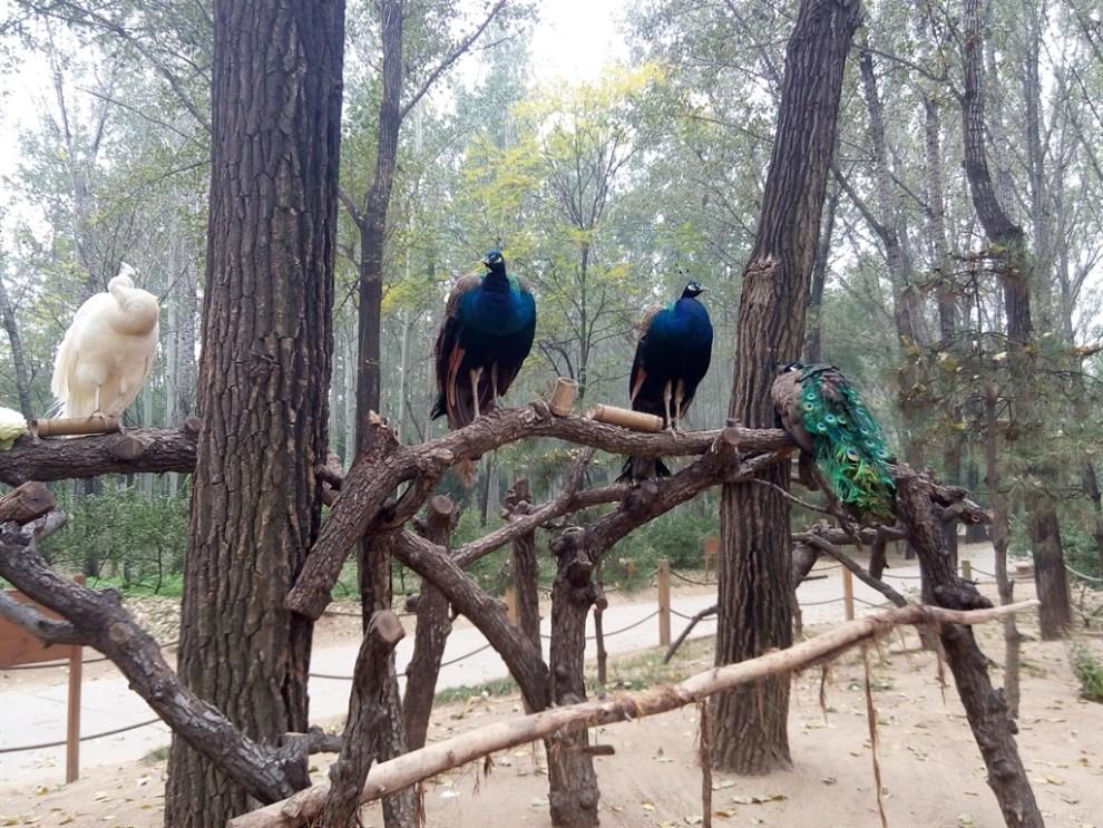【【北京逸动联盟】大兴野生动物园一日游】