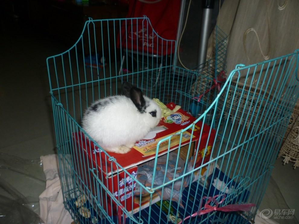 [首发]]可爱的宠物兔