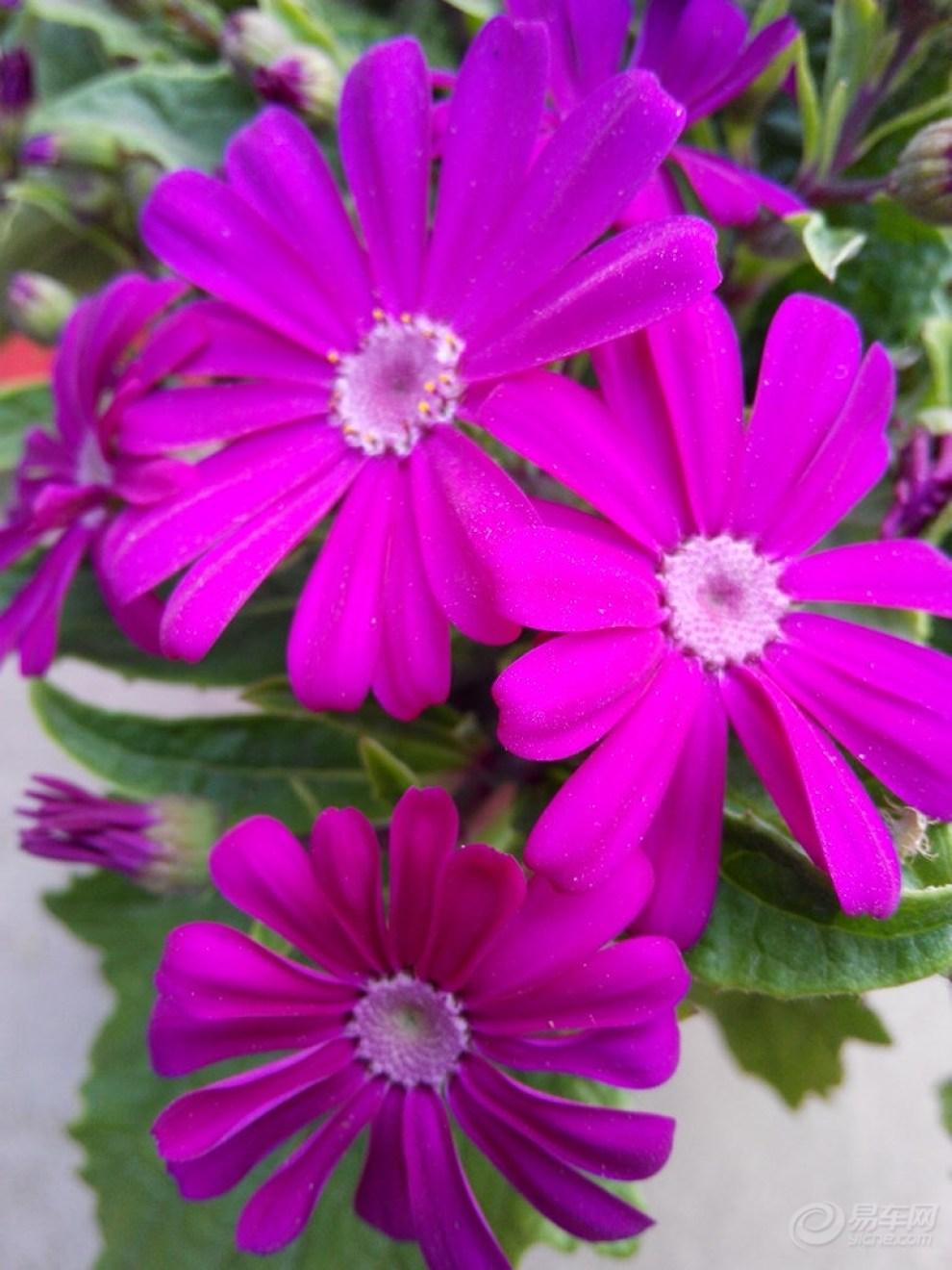 【【春暖花开】春天气候温暖,百花盛开,景色优