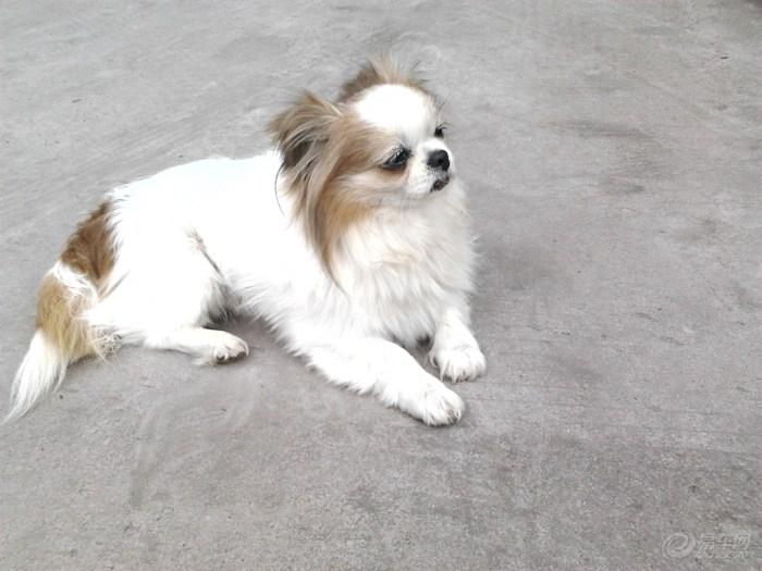 【【动态帝】小美也有情】_论坛v动态表情_汽恶搞qq宠物包gif图片下载表情图片