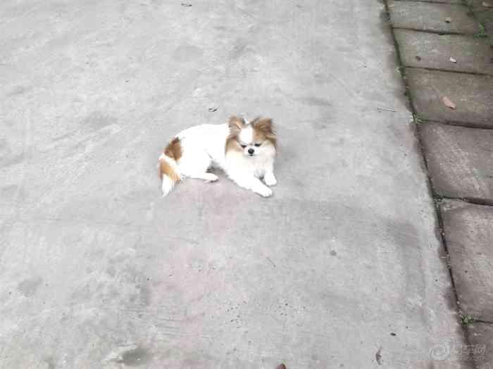【【论坛帝】小美也有情】头像当家表情论坛_微信表情制作宠物在哪图片