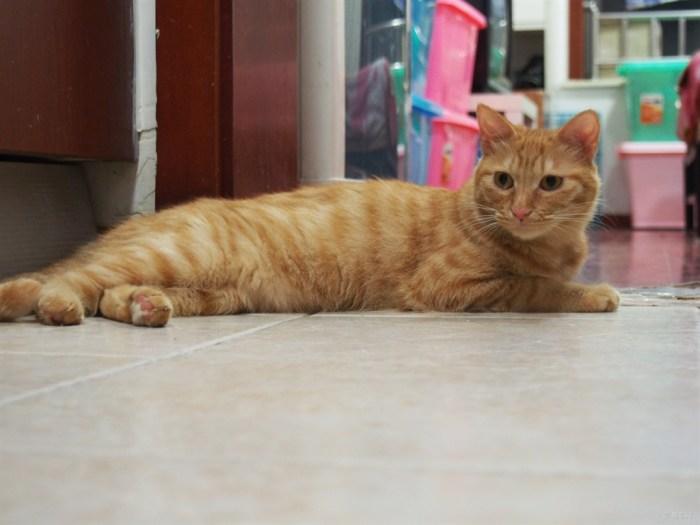 【宠物读心术】流浪小奶猫华丽变身 萌萌哒酷酷哒