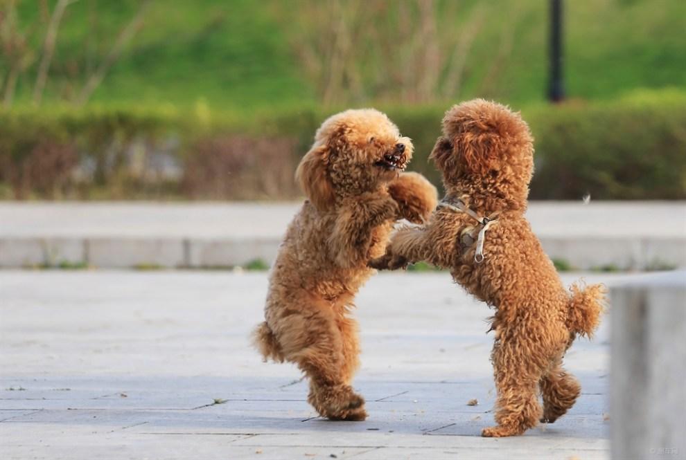 什么动物会跳舞