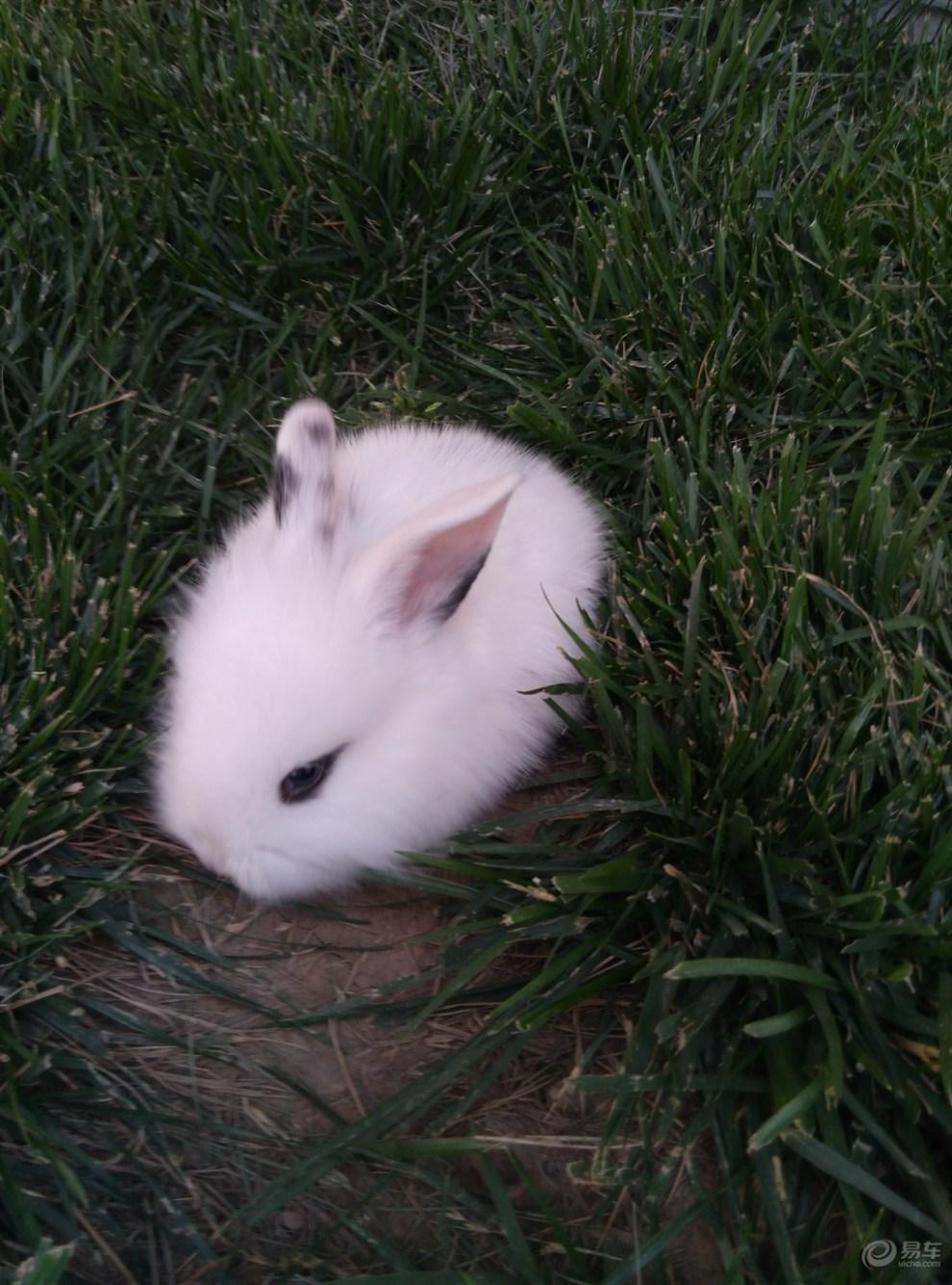 【小白兔】_宠物当家论坛图片集锦_汽车论坛-易车网