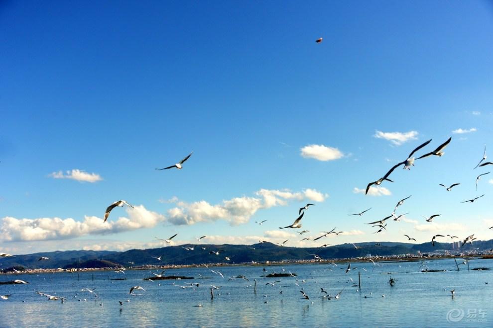 《我眼中的冬日情怀》杞麓湖傍海鸥飞