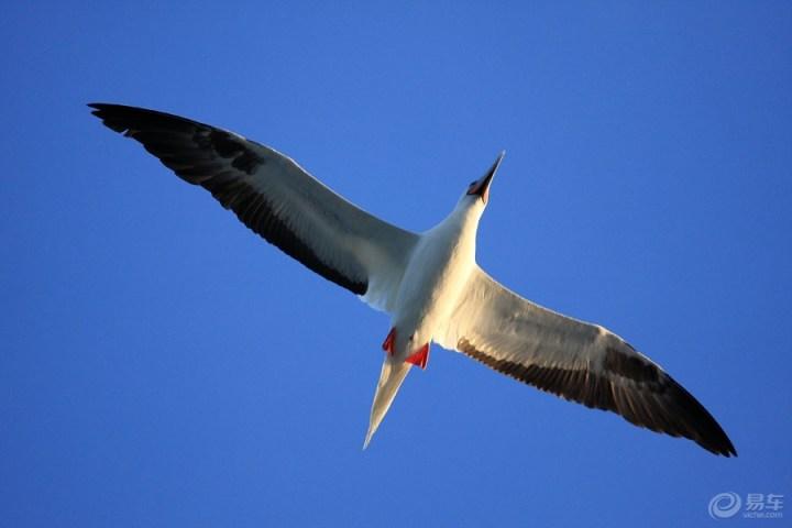 鸟儿在同一片蓝天飞翔