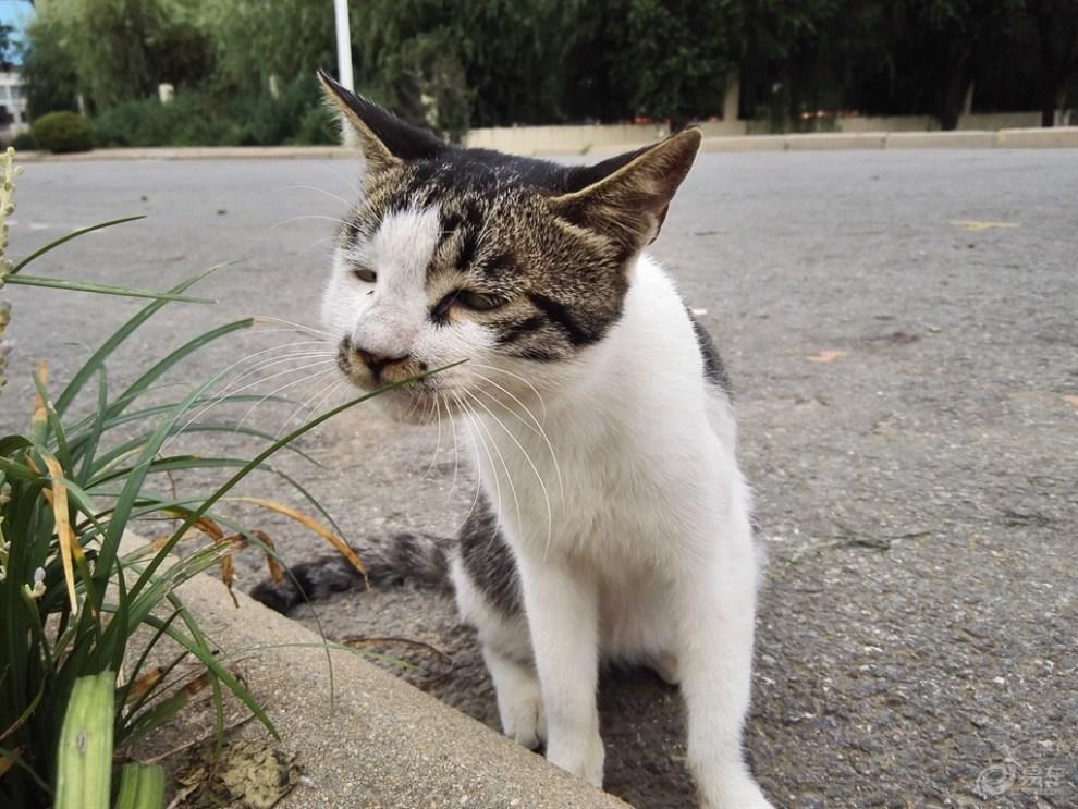 一只小猫咪