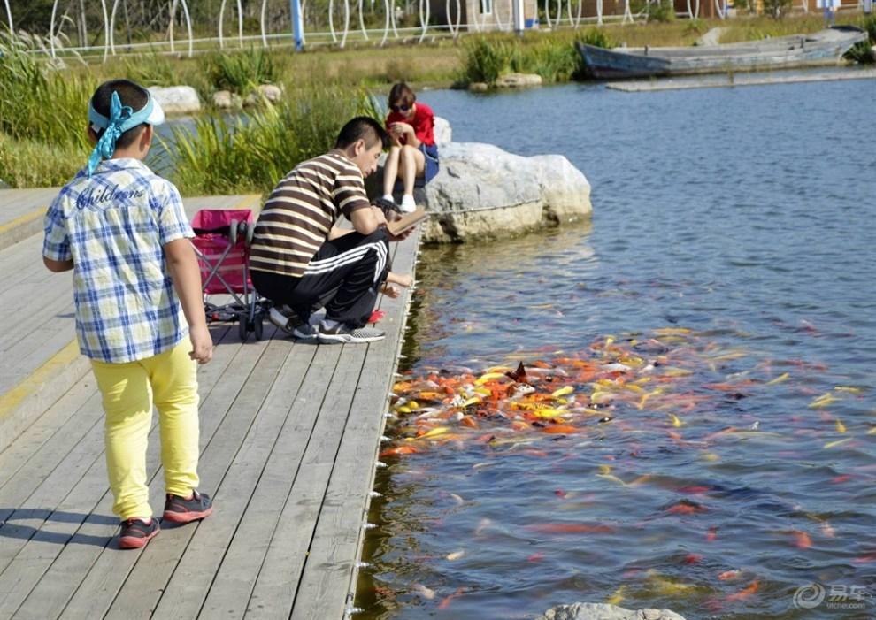 【【超宝动起来】着宝宝在小鲤鱼湖边玩】_超