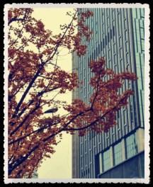 记录街头的DS与靓丽的风景