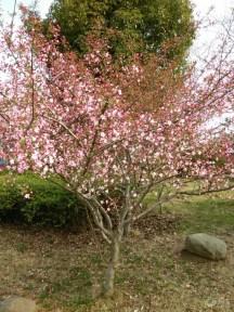 一年之计在于春,春游的朋友们可以出来喽