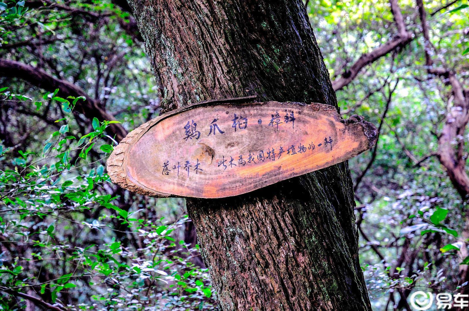 【神洲瑶都的袖珍原始树林】