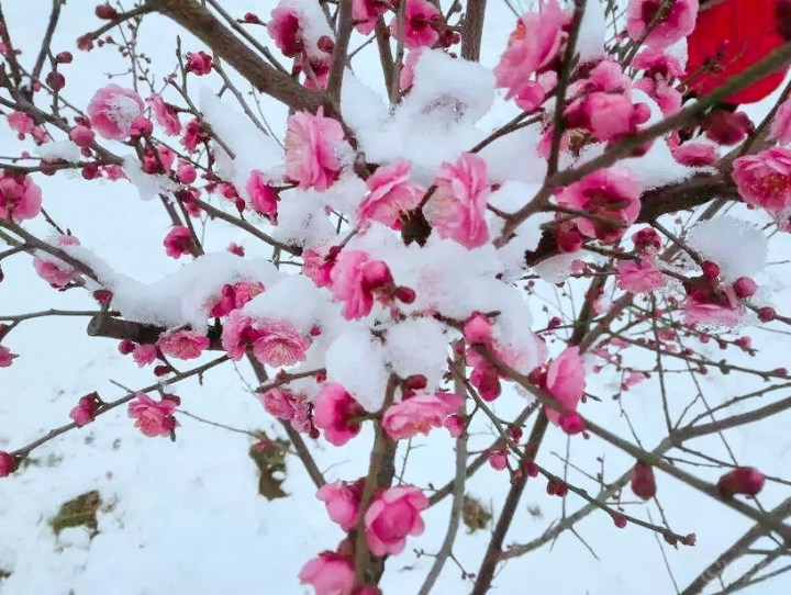 #乐驾新春#情人节里踏雪寻梅