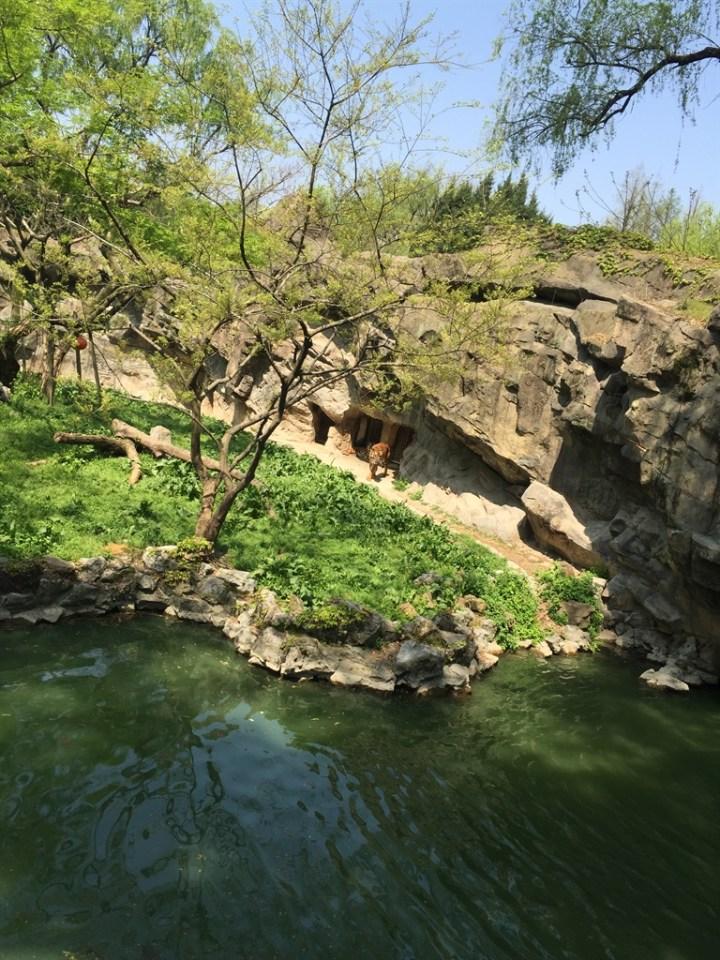 驾凯美瑞来一次说走就走的旅行-上海动物园自驾游