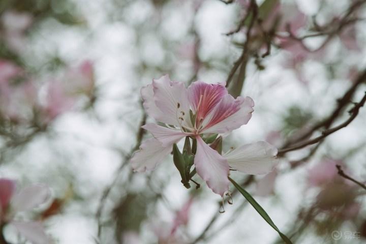 夏至早至,回望春日已是昨日,不变的是繁花与你