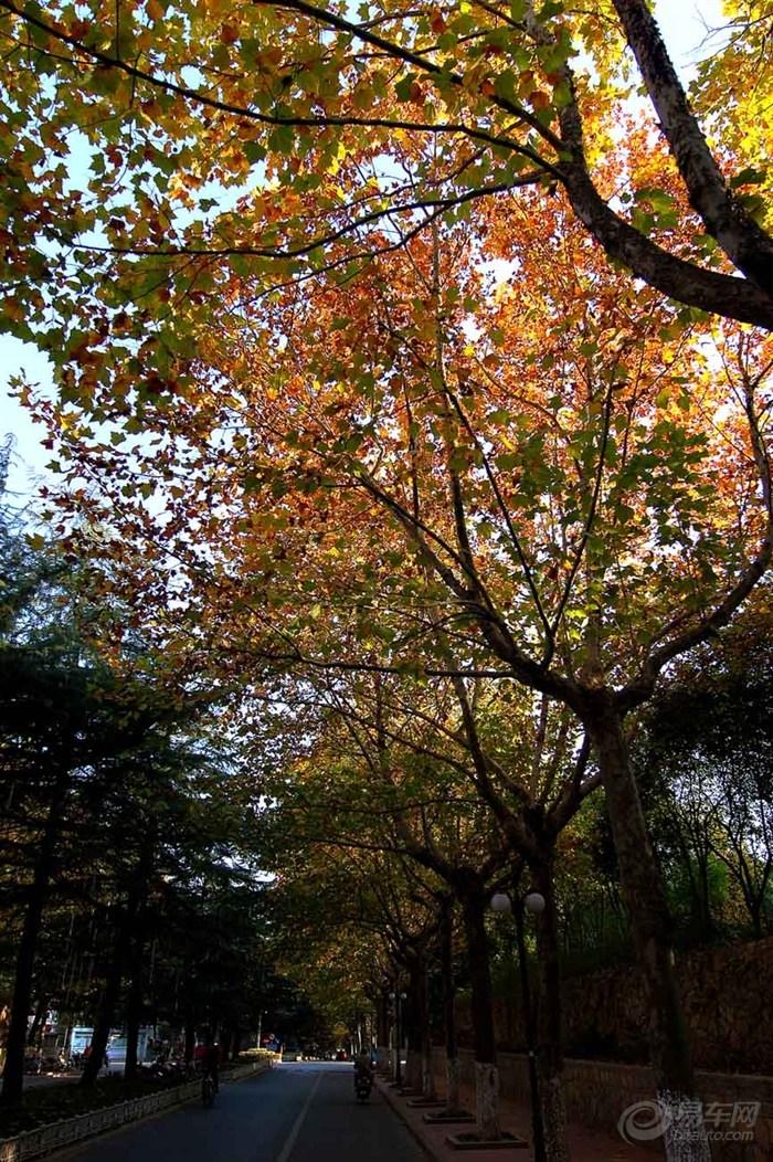 徐州高校校园秋色图片