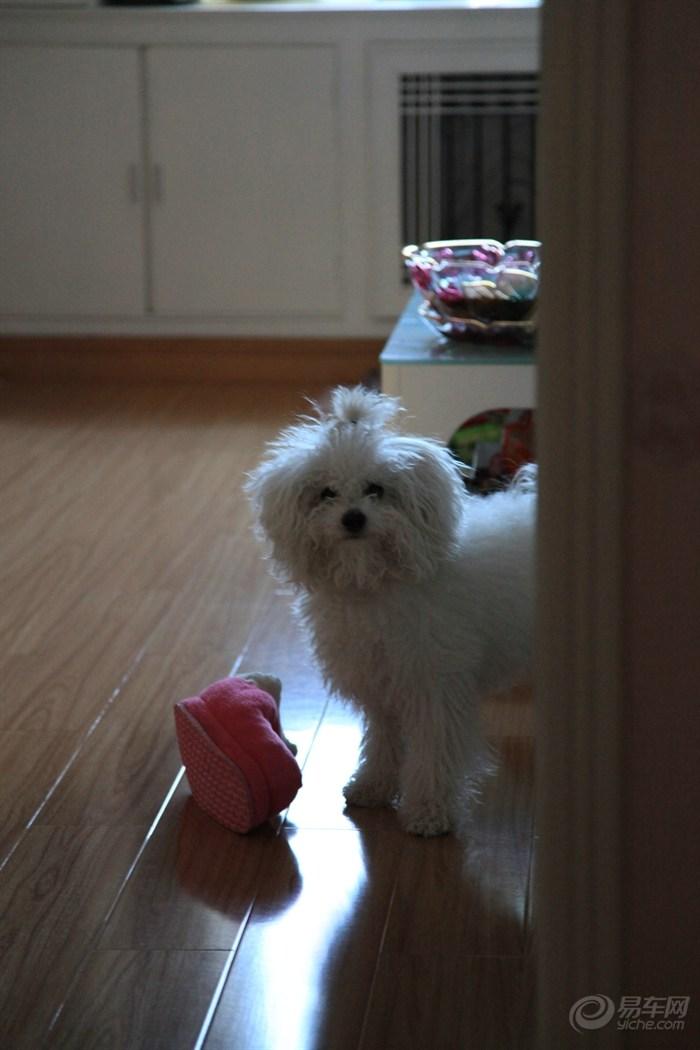 【【宠物当家】dila春节美容全过程+麻将88番九连宝
