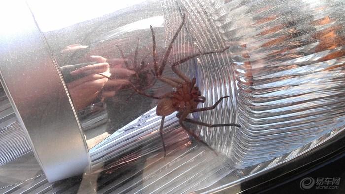 我的风云2被 蜘蛛侠 征用了高清图片
