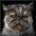 瘦猫001