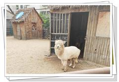 【易车答主自驾游】尊享五星级酒店,畅游郑州动物园!