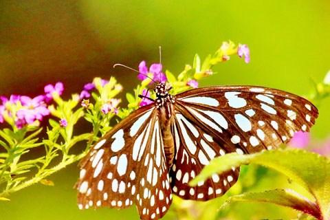 【广东深度游3】肇庆鼎湖山的蝴蝶谷-幽静峡谷探寻拍蝴蝶