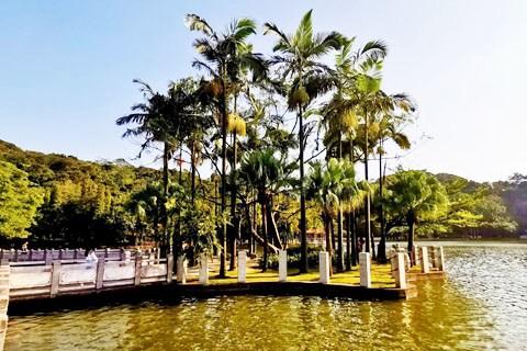 【广东深度游5】佛山西樵山天湖竹林-山顶天湖方形竹子