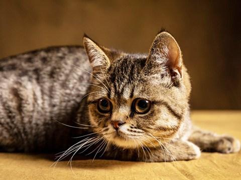 【猫性人生】
