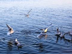 斜阳浮远水,归鸟下疏林。悠悠花上蝶,故故作双飞。