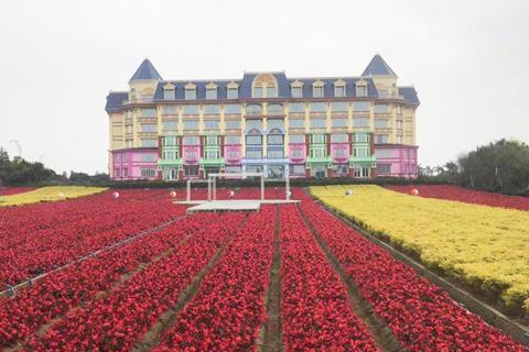欣赏百万葵园名花,走进温馨与情趣的童话世界