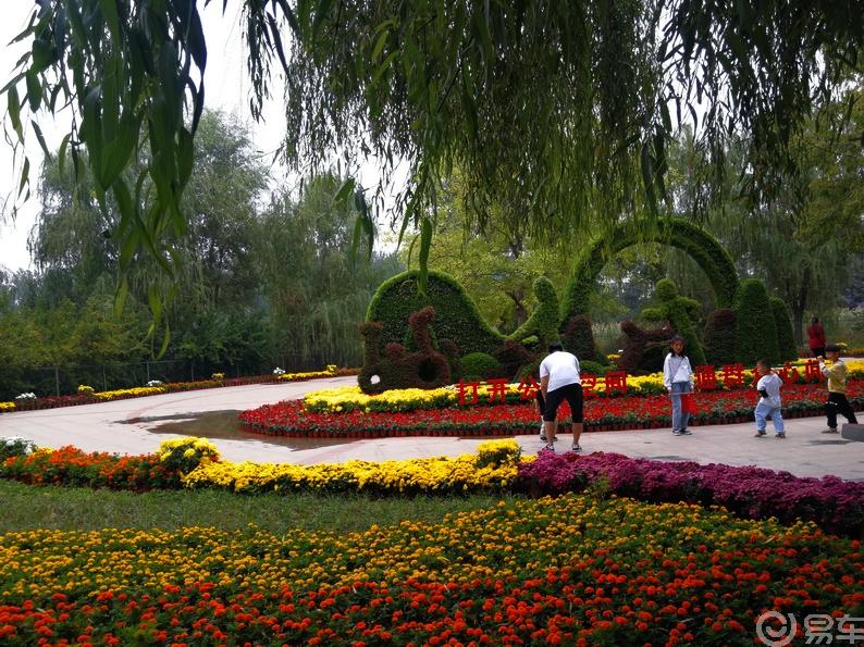 【中原金秋,易很精彩】游在水杉公园,美哉花开盛世