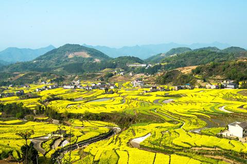 大自然的金秋盛装,藏在山间的那一抹金黄